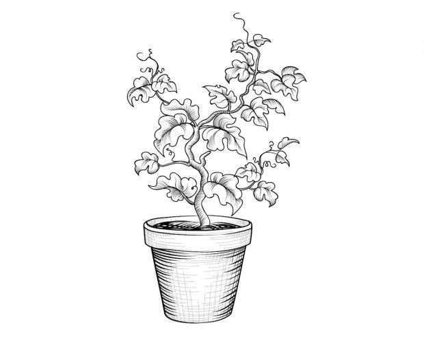 grauvre-plante