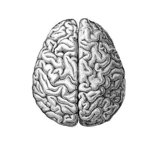 biais-cognitifs-cerveau-lunaweb